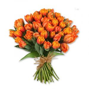 usos y significado del tulipan anaranjado