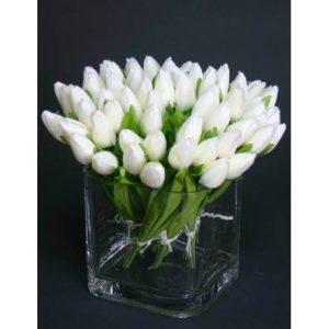 significado y usos del tulipan de color blanco