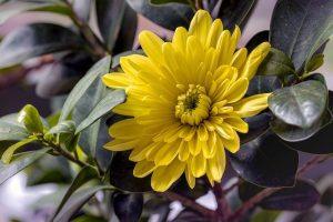 propiedades de la flor