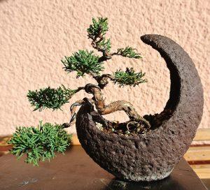 podar un bonsai de almendro
