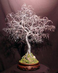 bonsai por semilla