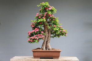 cuidados del bonsai en maceta
