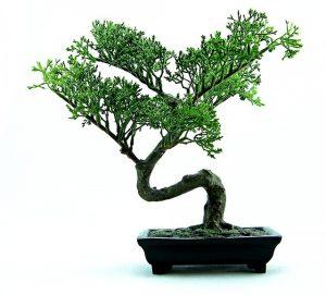 que es un bonsai
