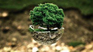 como plantar un bonsai