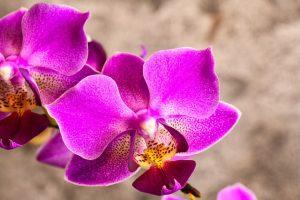 como y cuando plantar una orquidea