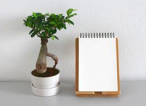 bonsai de almendro