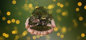 como podar un bonsai acebuche