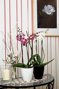 cuidados de la orquidea en maceta