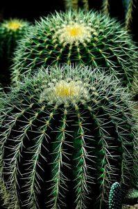 propiedades del cactus