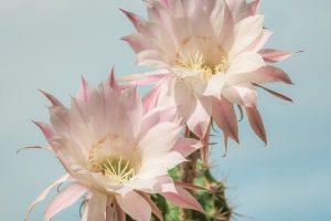 caracteristicasd el cactus
