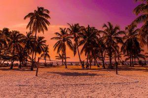 caracterisitcas de las palmeras