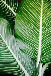 como cuidar una palmera