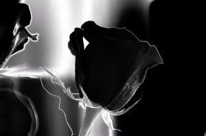 significado de la rosa negra