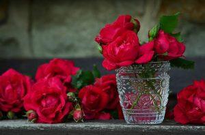 cuidar una rosa