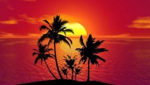 cuidados de la palmera enana