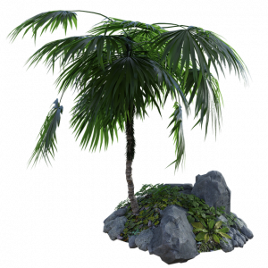 Características de la palmera enana
