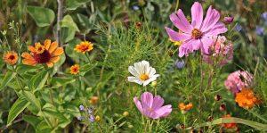 flor de bach