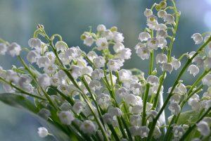 flor del valle
