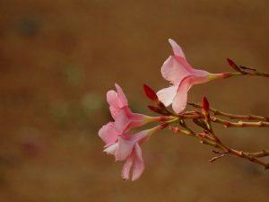 como es la flor