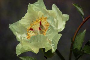 caracteristicas de la flor