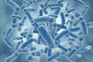 bacteria intestino