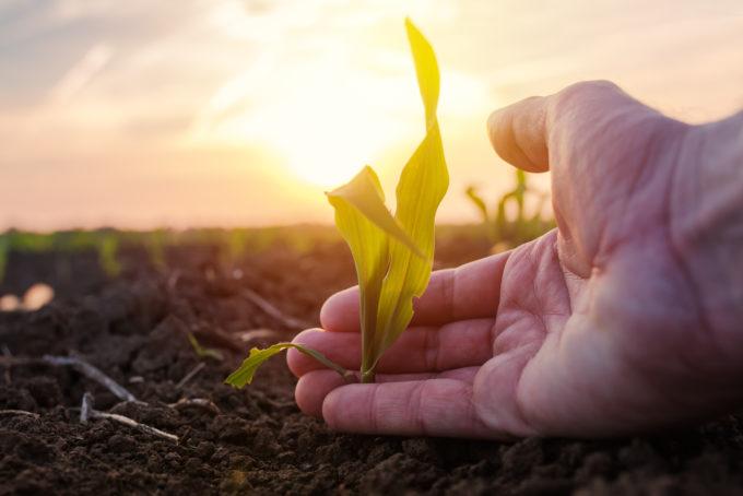 Producción sostenible de alimentos