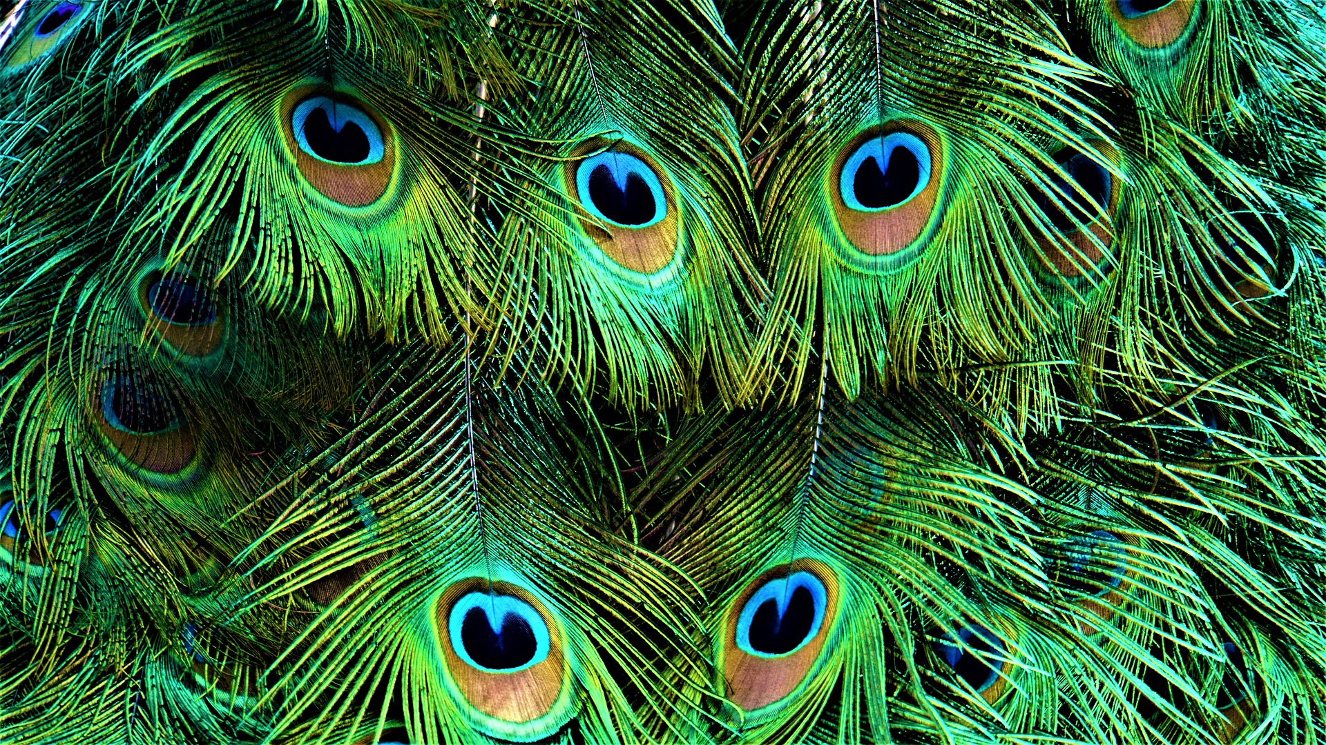 compromiso biodiversidad