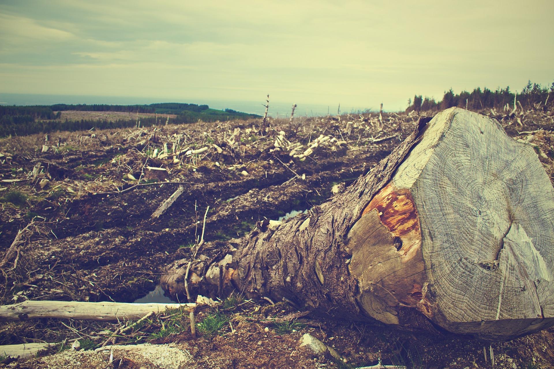 denuncias medio ambiente