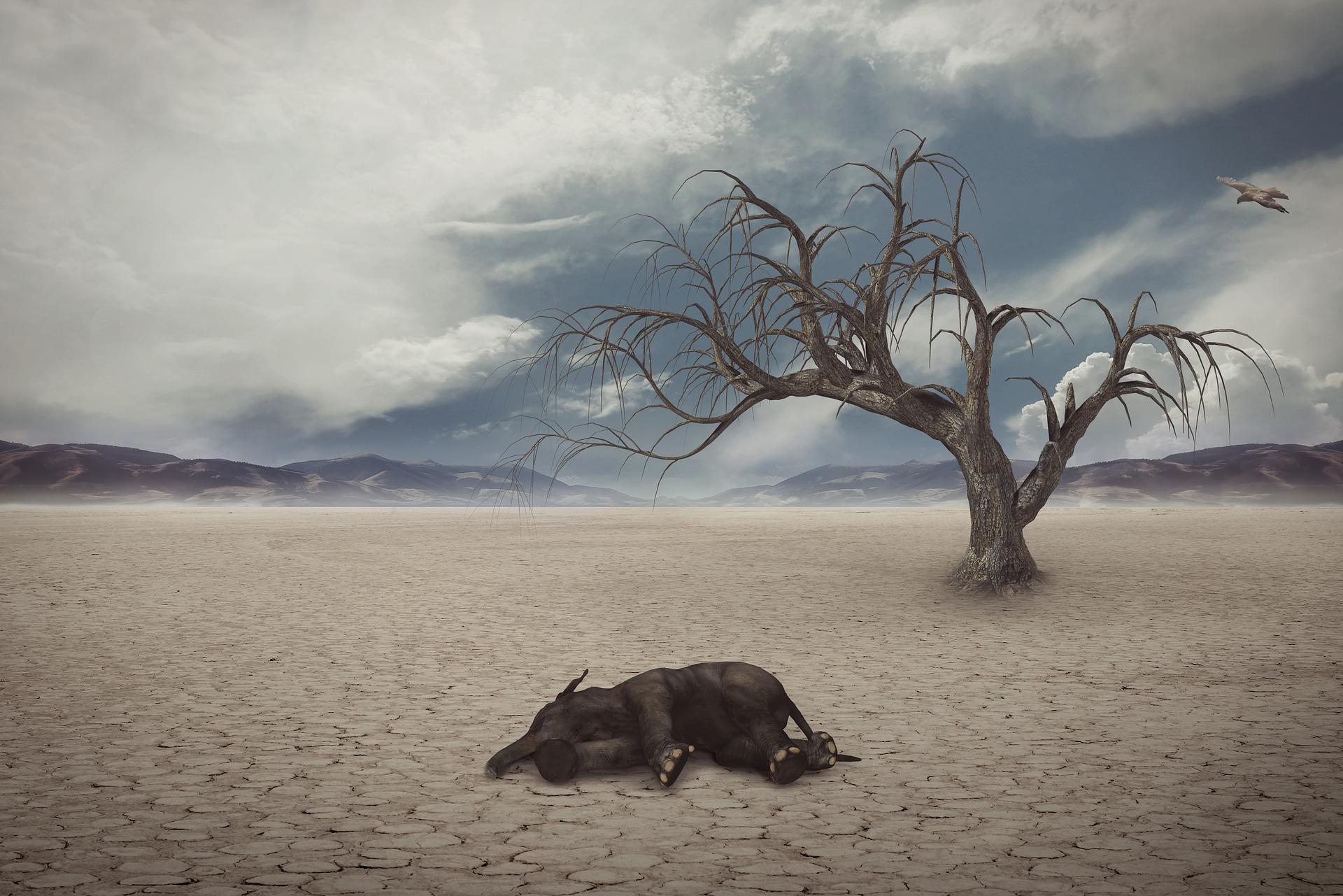Muerte de especies por el calentamiento global