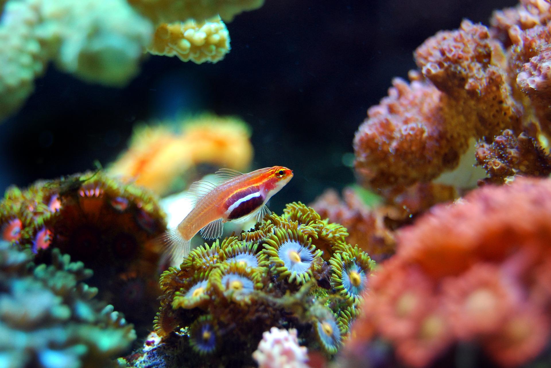 Barreras de coral