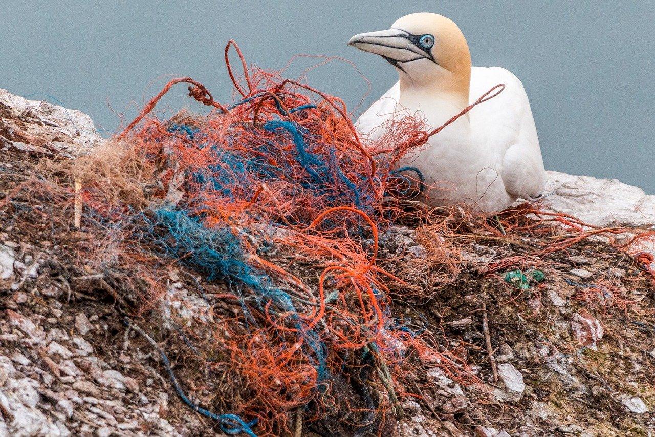Contaminación del plástico