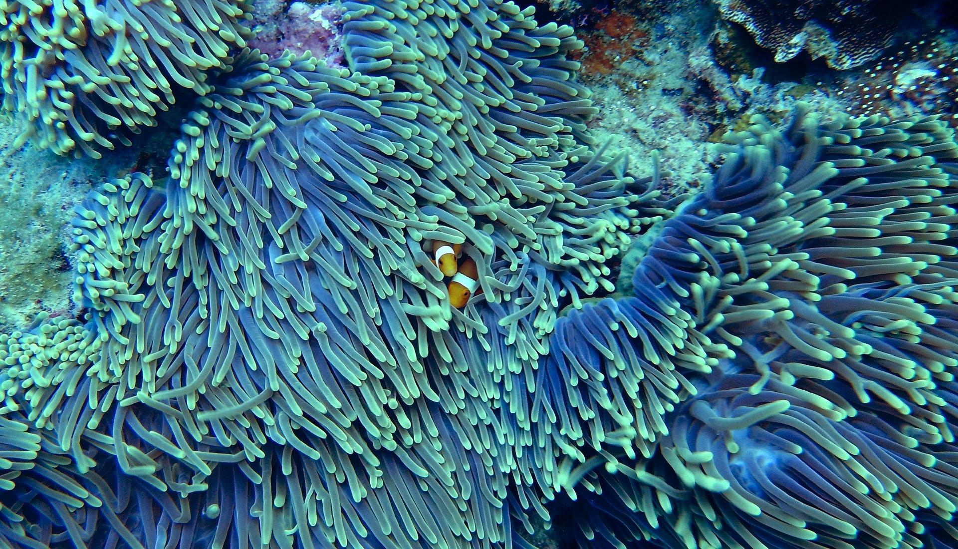 arrecife de coral contaminado