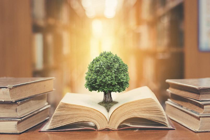 El tema transversal en la educación ambiental