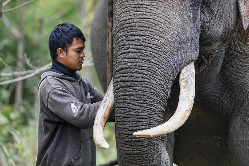 Animales Asia