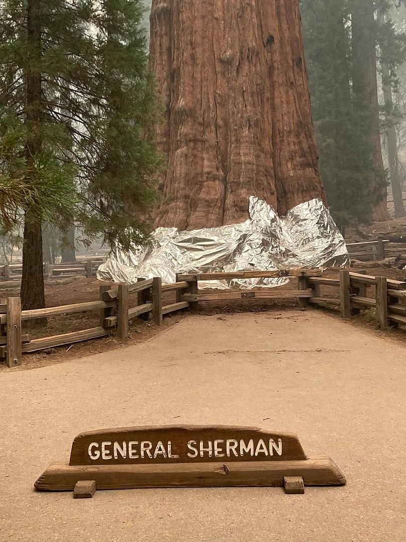 Parques nacionales Sequoia y Kings Canyon